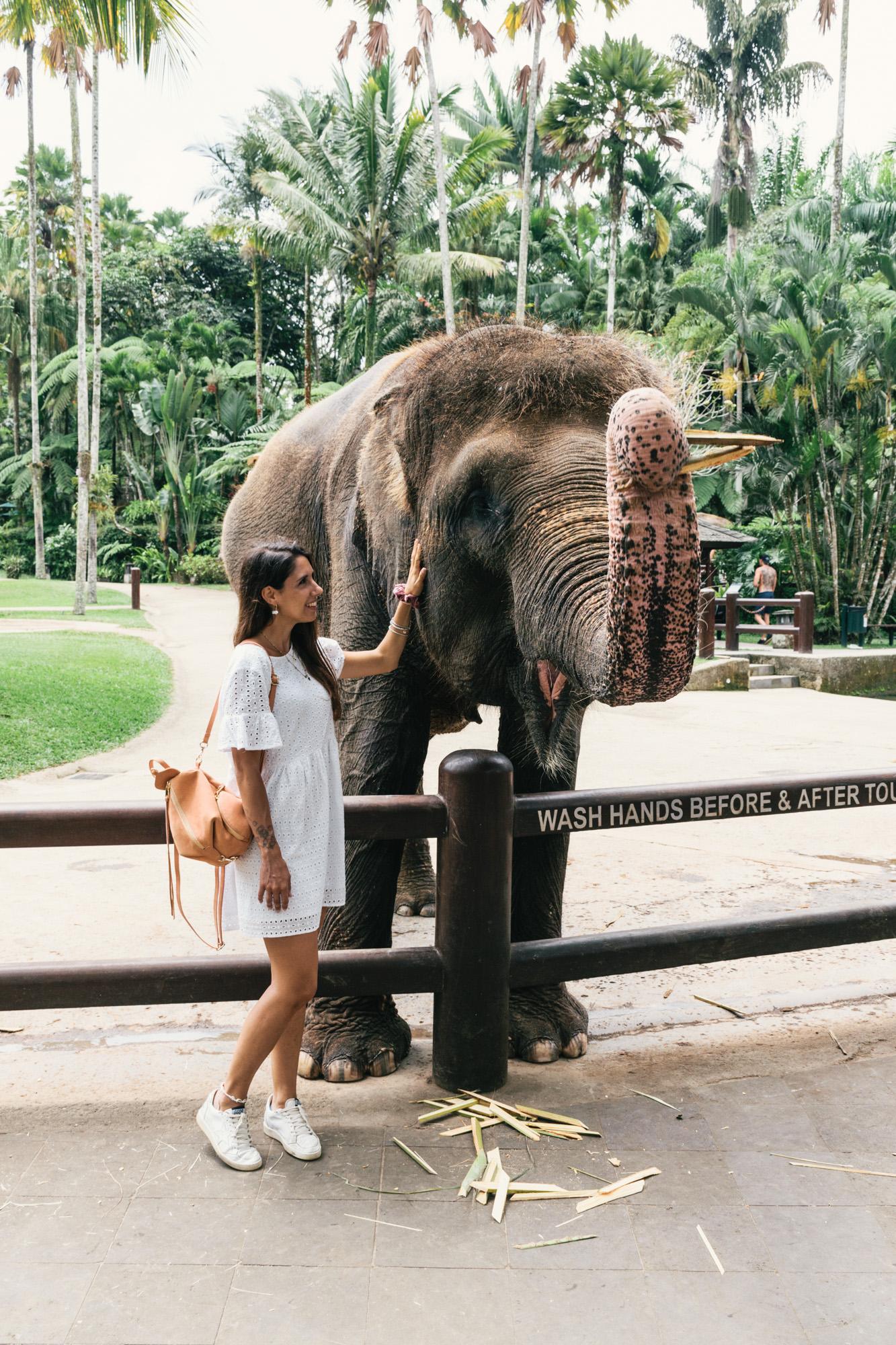 Mason Elephants Park